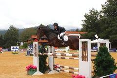 Sport equestre I Fotografie Stock