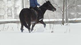 Sport equestre - un cavallo con il cavaliere che cammina nel campo nevoso durante lo snawfall - rallentatore archivi video