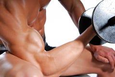 Sport exercising. Biceps. Sport exercising for men. Isolated on white Stock Photography