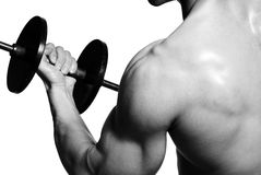Sport exercising... Biceps. Sport exercising for successful people Royalty Free Stock Image