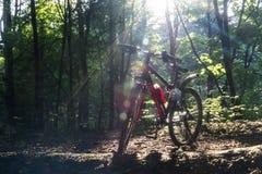 Sport fährt im Frühjahr Wald in den Strahlen des Sonnenlichts rad lizenzfreies stockbild
