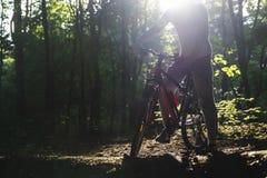 Sport fährt im Frühjahr Wald in den Strahlen des Sonnenlichts rad stockbild