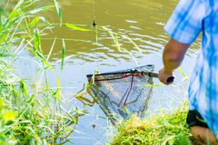 Sport fisherman getting his catch out of the water with dip royalty free stock photo