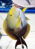 Sport fishing Royalty Free Stock Image