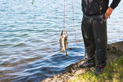 Sport Fishing. Recreational fishing : fisherman standing in shade by lake holding and showing off his catch of the day of rainbow trout strung on a line. Copy stock photos