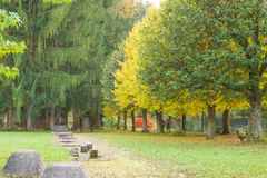 Sport and health in autumnal park. Relaxing and freshair in colorful autumnal park Stock Photo