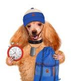 Sport. Hond. stock foto's