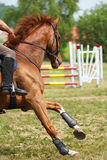 Sport horse royalty free stock photos