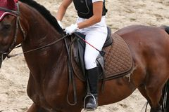Sport horse standing in action during competition under saddle outdoor. Sport horse close up under old leather saddle on dressage competition. Equestrian sport stock photos