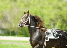 Sport horse moving portrait on a sunny day Stock Photos
