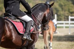 Head shot closeup of a dressage horse during competition event. Color, equestrian. royalty free stock photo