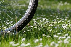 Sport and Nature. Bicycle wheel on a medow Royalty Free Stock Photos