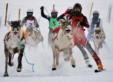 Sport racing activity in Lapland the deer running competition league stock photos