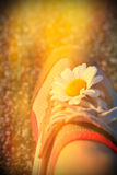 Sport running shoes. With flower Royalty Free Stock Photo