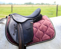 Sport saddle with stirrups on a back of a horse Stock Image
