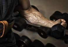 sport Silna atleta trzyma dumbbell w jego mięśniowej ręce Zdjęcie Royalty Free