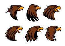 Sport team eagle or hawk bird head vecor mascot. Eagle or hawk vector mascot for sport team badge. Symbol of predatory falcon bird head with open beak. Heraldic Stock Photo