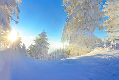 Sport track. Winter sport track, illuminated by the sunlight, on mountain Stock Photography