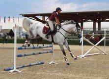 Sport - visa banhoppningutbildning - banhoppning för vit häst fotografering för bildbyråer