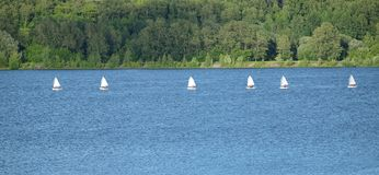 Sport yachts sailing in calm water near green coastline royalty free stock photo