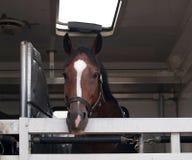 Sporta koń przed rywalizacją Zdjęcia Stock