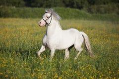 Sportar för vit häst utomhus Arkivfoton