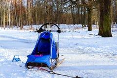 Sportar som sledding med dogsled på, skidar Springer slädar Royaltyfri Foto