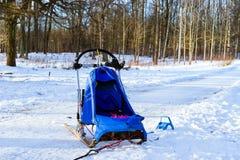Sportar som sledding med dogsled på, skidar Springer slädar Royaltyfri Bild