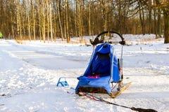 Sportar som sledding med dogsled på, skidar Springer slädar Arkivfoto
