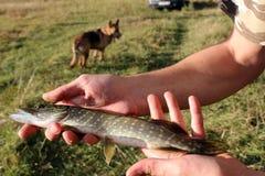 Sportfischen auf dem Dnieper-Fluss ist ein großer Feiertag lizenzfreie stockfotografie