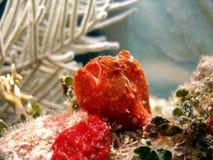 sportfiskarefiskgroda Arkivfoto