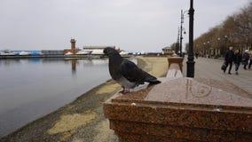 Sporthamn vladivostok Ryssland Royaltyfri Bild