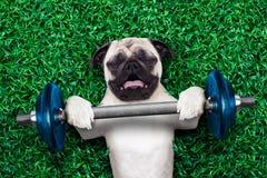 Sporthund Stockbild