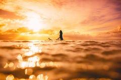 Sportieve brandingsvrouw in overzees bij zonsondergang of zonsopgang De winter die in oceaan surfen stock afbeeldingen