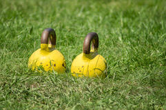 Sporting a 16-pound weights. royalty free stock images