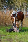 Sportive de fille et son cheval au printemps Photographie stock