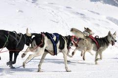 Sportive Hunde im Berg lizenzfreies stockfoto