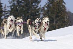Sportive Hunde im Berg Lizenzfreie Stockfotos
