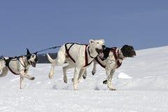 Sportive Hunde im Berg lizenzfreie stockbilder