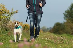 Sportive woman runs with her dog in autumn. Sportive woman runs with her dog on a leash in autumn exterior shot Stock Image