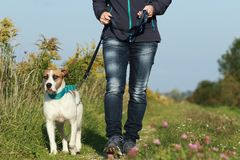 Sportive woman walks her dog in autumn. Sportive woman walks her dog on a leash in autumn exterior shot Stock Photo
