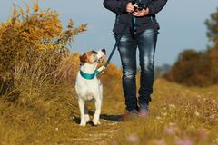 Sportive woman walks her dog in autumn. Sportive woman walks her dog on a leash in autumn exterior shot Stock Image