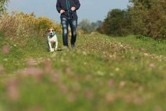 Sportive woman walks her dog in autumn. Sportive woman walks her dog on a leash in autumn exterior shot Royalty Free Stock Photo