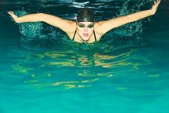 Sportlerinschwimmen-Schmetterlingsanschlag im Pool Stockbilder