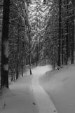 Sportlight στα δέντρα Στοκ εικόνες με δικαίωμα ελεύθερης χρήσης
