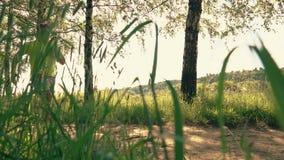 Sportman die langs de steeg van het de zomerpark lopen stock videobeelden