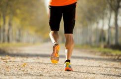 Sportmannen med rinnande det fria för stark kalvmuskel i av vägslinga grundar med träd under härligt höstsolljus Royaltyfria Bilder