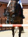 Sportpaard die door hindernis springen Het paard toont in detail het springen Stock Foto's