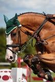 Sports équestres photographie stock libre de droits