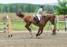 Sports équestres, cheval sautant, sauter d'exposition image libre de droits